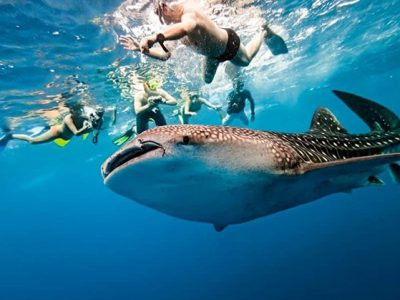 oslob-whale-shark-encounter[1]